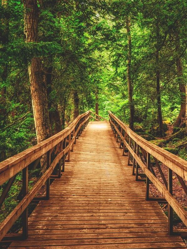 Chemin en bois dans la for�t